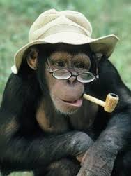chimp with pipe